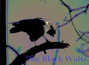 bowing crow 2 copy